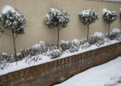 Front Garden HQ 012